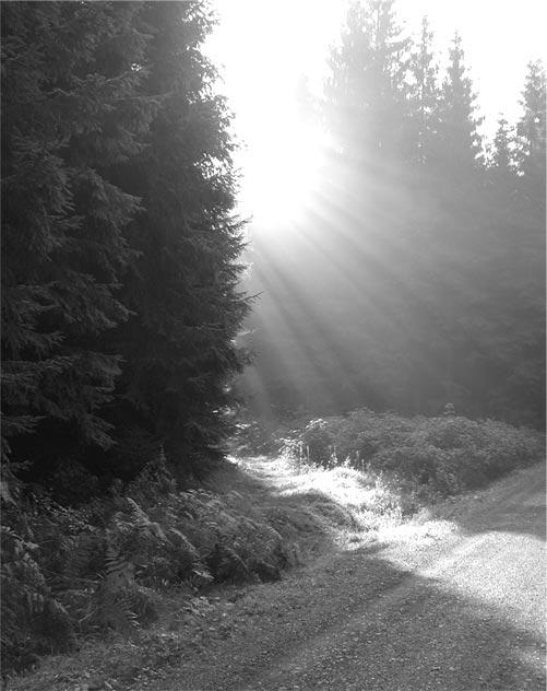 Morgenstunde im Wald