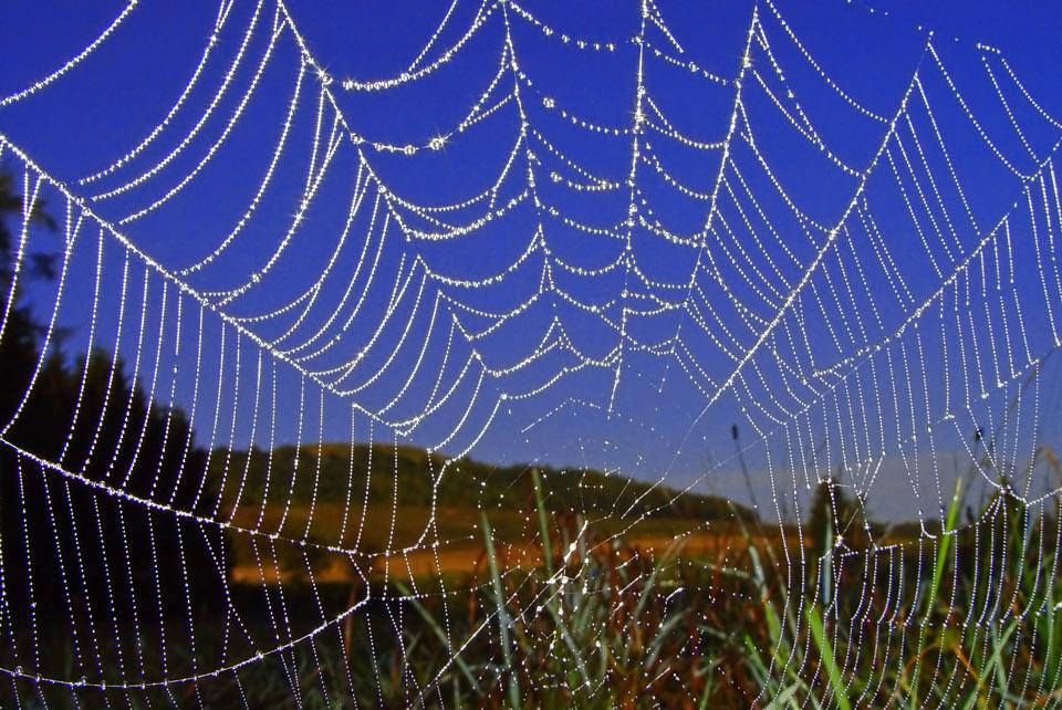 Morgentau auf Spinennetz