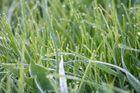 Morgentau im Gras