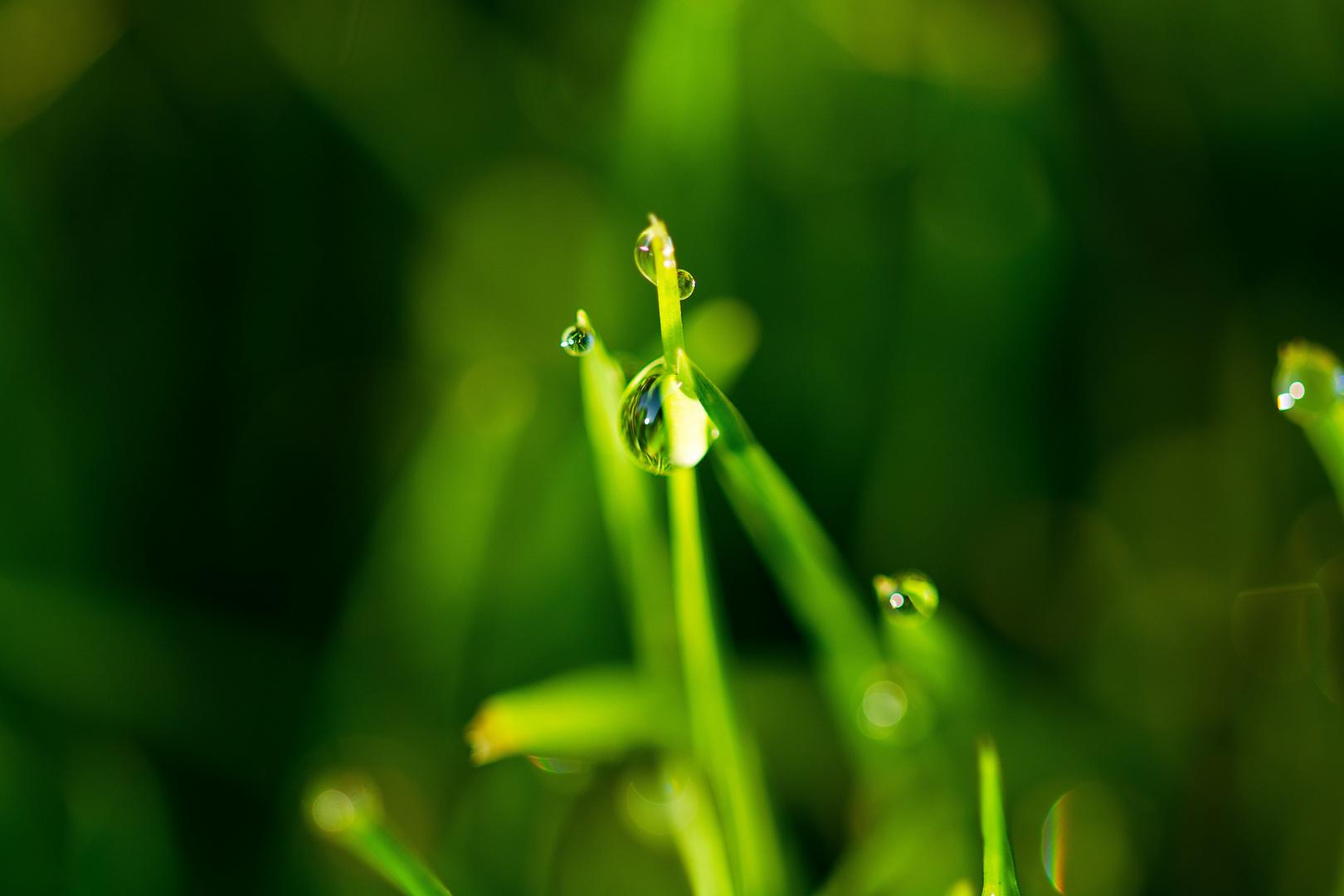 Morgentau im grünen.......