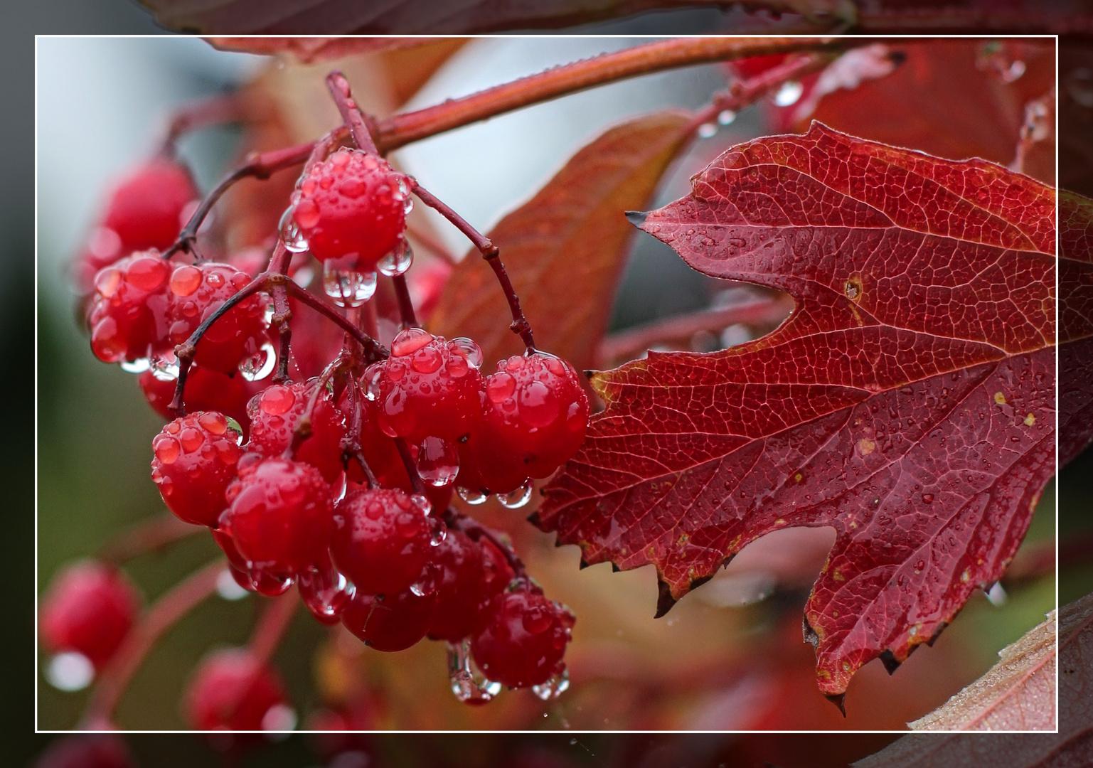 Morgentau im Herbst