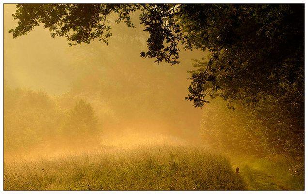 Morgentliches Nebelwandern