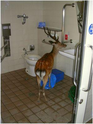 Morgentoilette