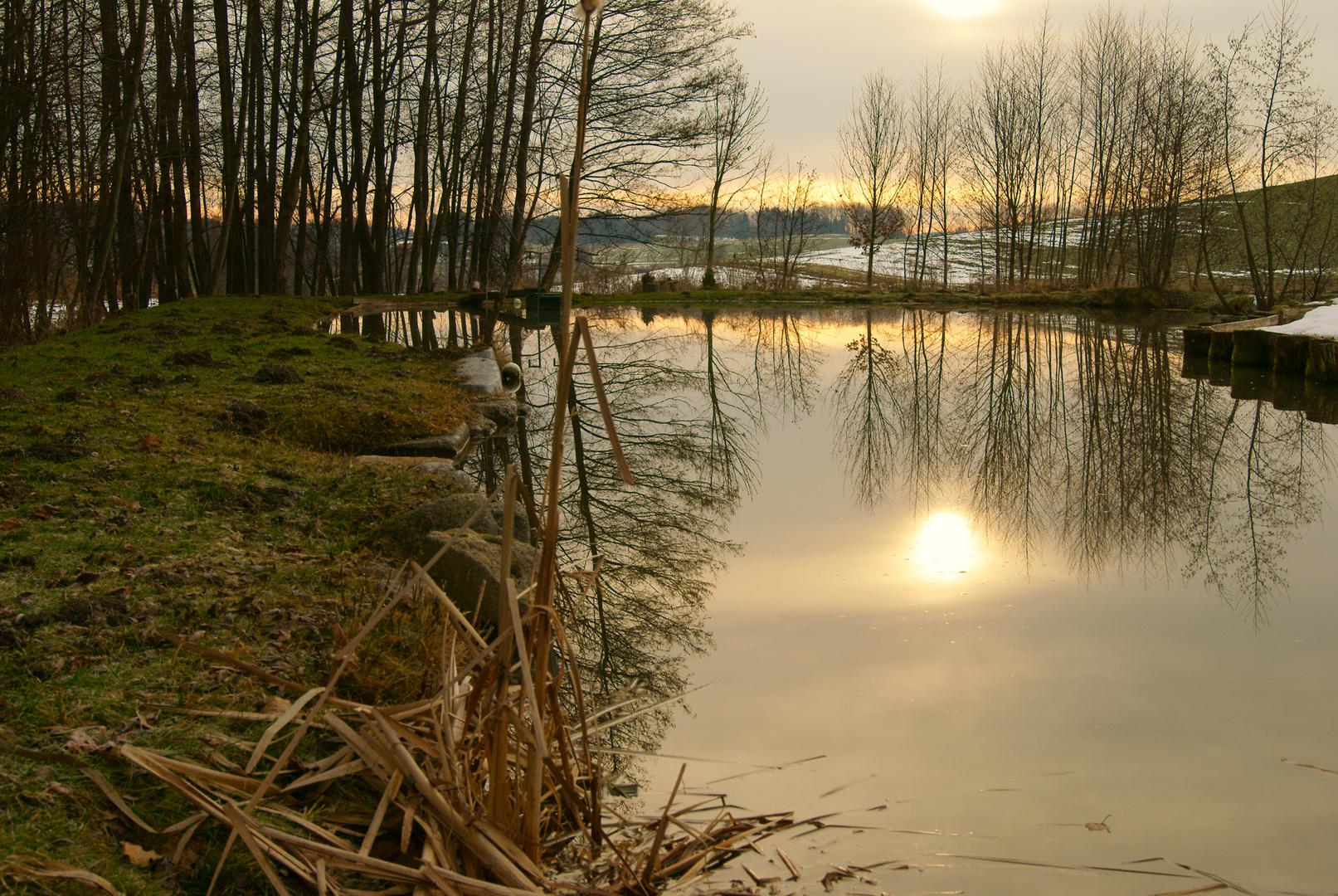 Morgenträume am Teich