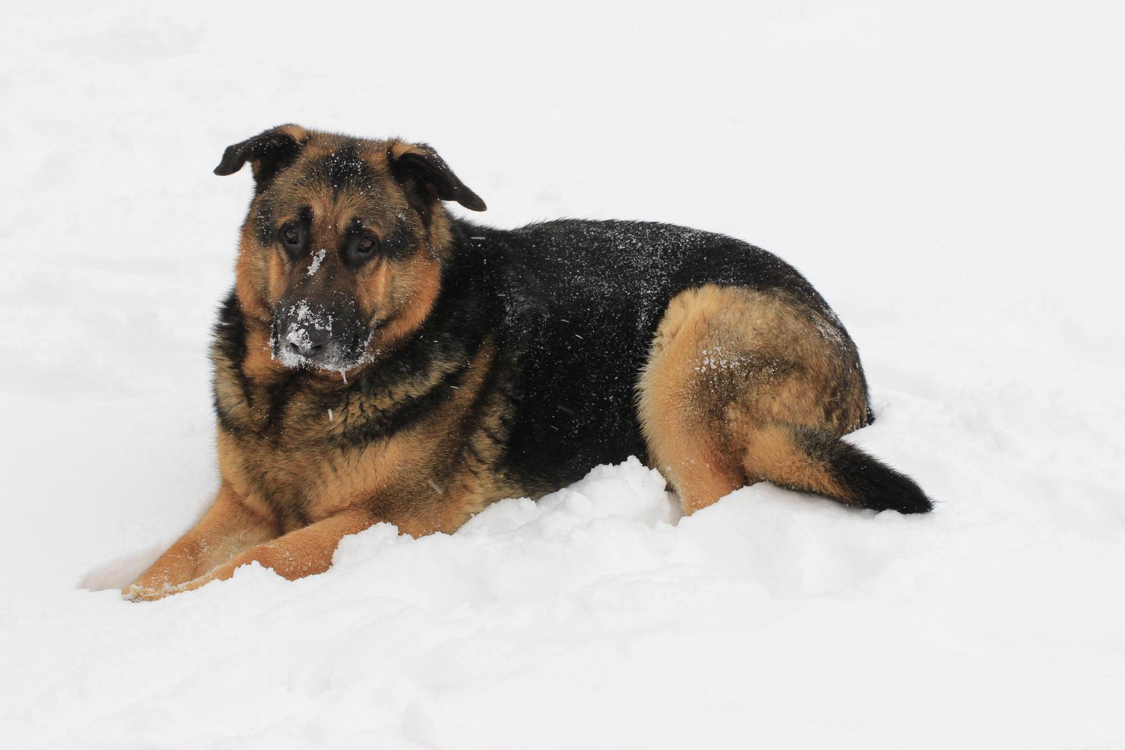 Moritz im Schnee