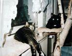 Moritz und Tommy