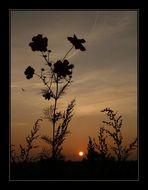 Morlingue Sunset