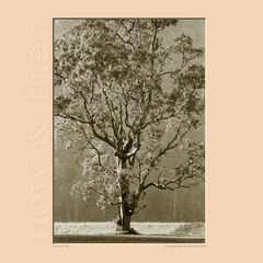 Mornig Tree (Series Now & Then)