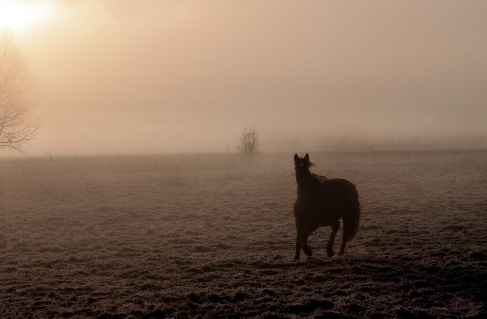 Morning fog 5