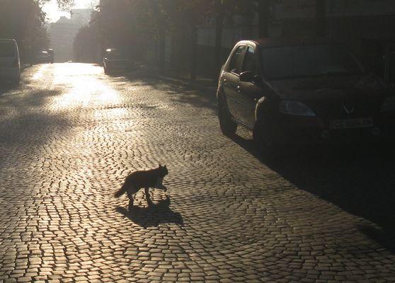 morning on my street