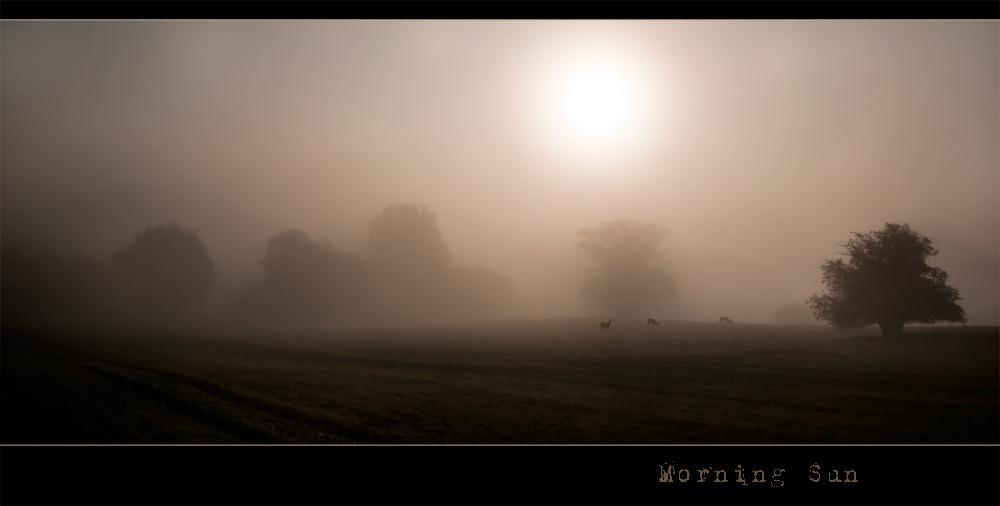 :: Morning Sun ::