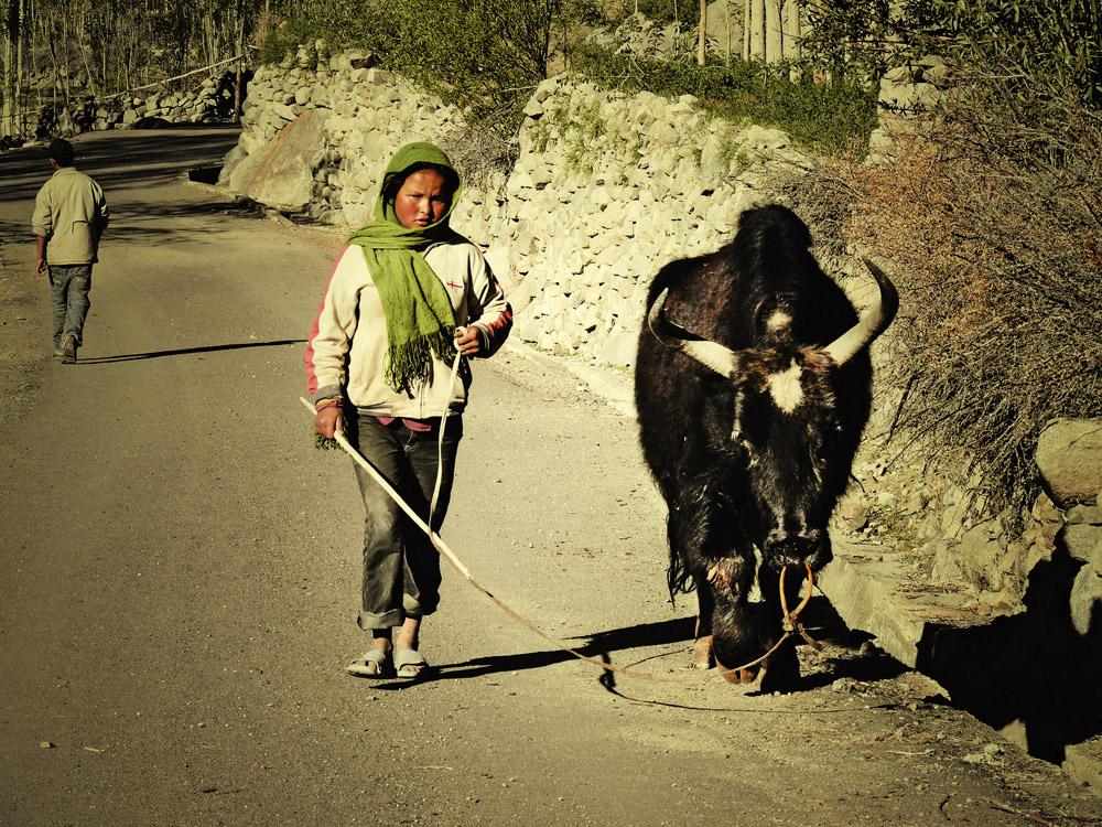 morningwalk...in ladakh