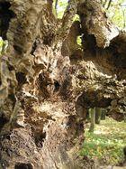 Morscher Baumstrunk