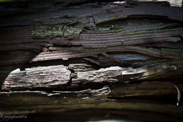 ***morsches Holz***