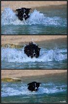 morski pas
