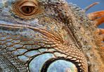 ..:.mosaic : landscape.:..