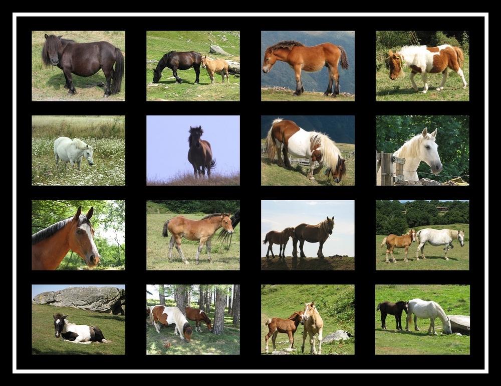 Mosaïque de chevaux