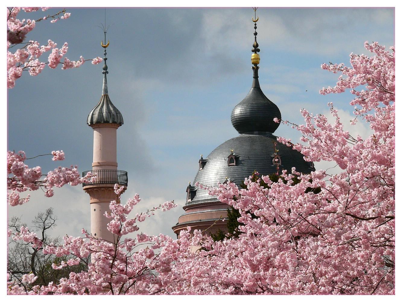 ~ Moschee in rose ~