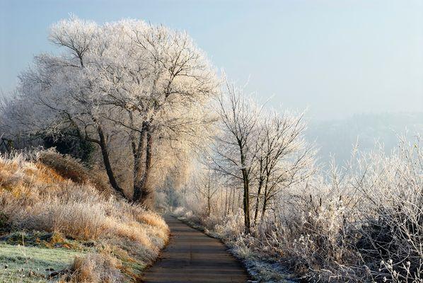 *Moselradweg im Winter*