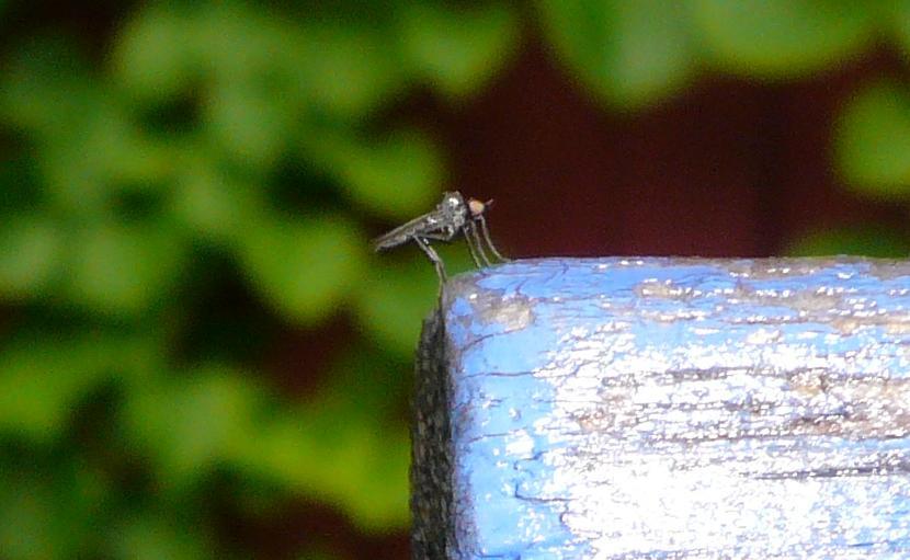 ¤ mosquito ¤