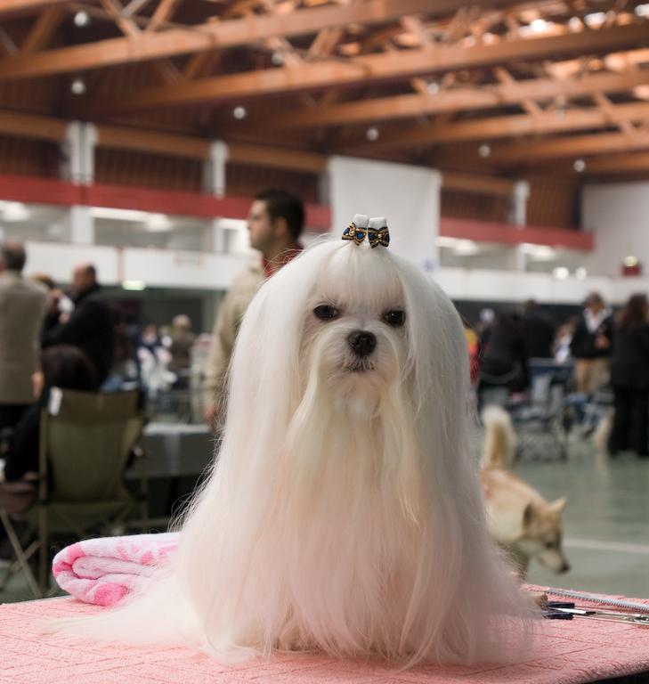 Mostra canina 2008