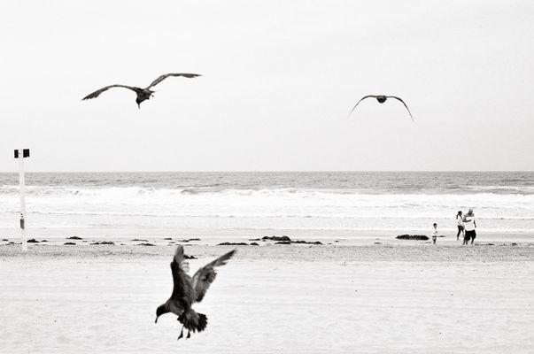 """Mostra online di Alessandro Ruiz """"Dettagli"""" - 9. California"""