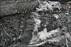 "Mostra online di Biagio Donati ""Burned textures"" - 7."