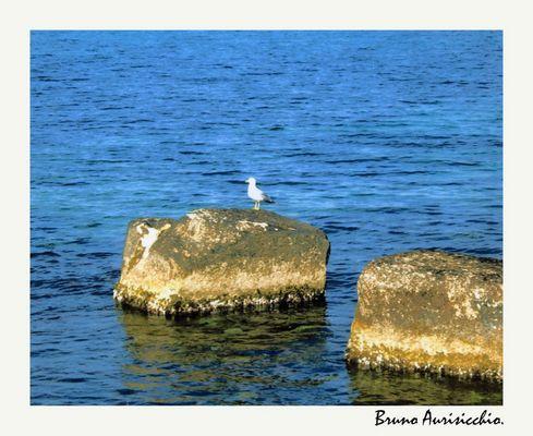 """Mostra online di Bruno Aurisicchio: """"Il mare"""" - 5. In posa sull'azzurro del mare"""