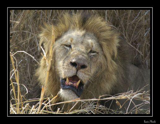 Mostra online di Enrico Maioli: La mia Africa - 1. Pacifico