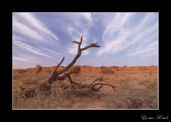 Mostra online di Enrico Maioli: La mia Africa - 10. Solitario...