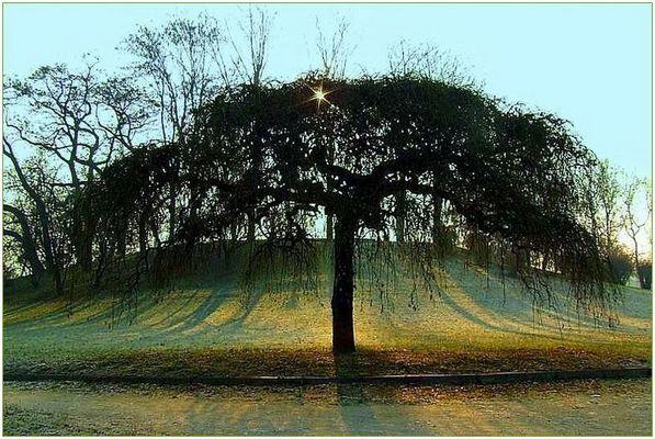 """Mostra online di Ettore Caio: """"Dall'alba al tramonto"""" - 6."""