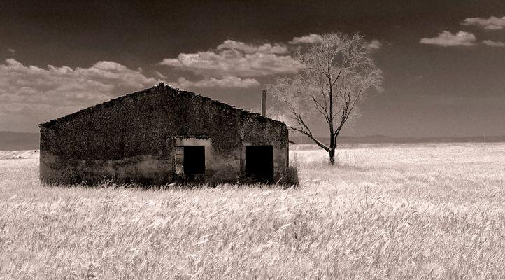 "Mostra online di Francesco Torrisi ""Solleone"" - 1."