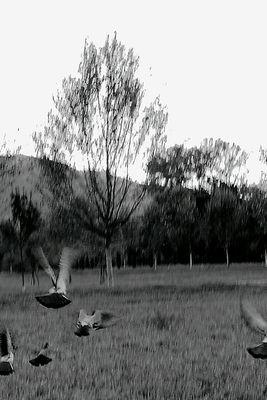 """Mostra online di Giorgio Franchi """"Un po' di silenzio"""" - 9."""