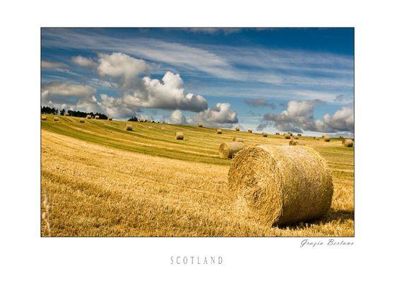 """Mostra online di Grazia Bertano: """"About Scotland"""" - 2. Fields of gold"""