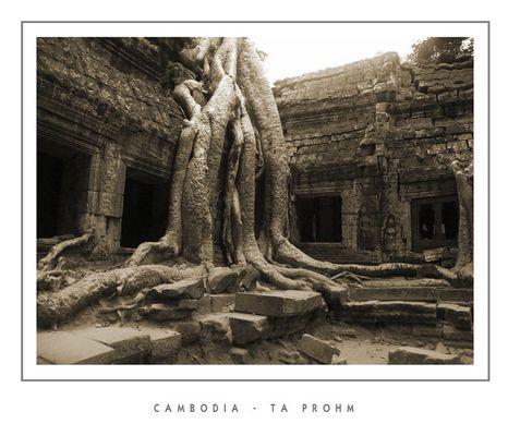 """Mostra online di Grazia Bertano: """"Non solo Khmer"""" - 2. Ta Phrom - viaggio a ritroso nel tempo"""