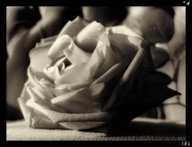 "Mostra online di Irene Ester Leo - ""Essence de Rose"" - 4."