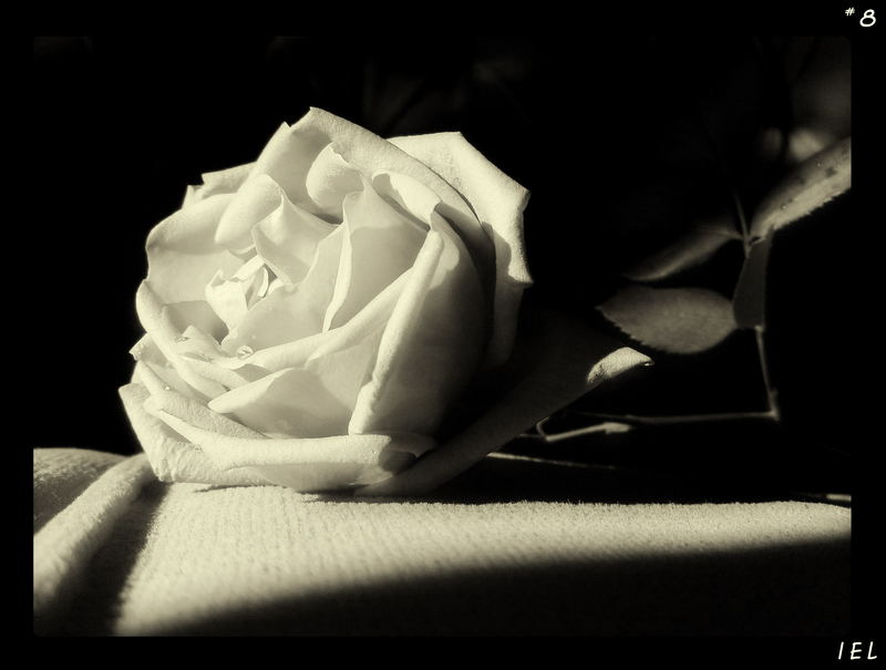 "Mostra online di Irene Ester Leo - ""Essence de Rose"" - 8."