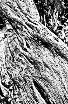 """Mostra online di laura fogazza - """"Il giardino incantato"""" - 10."""