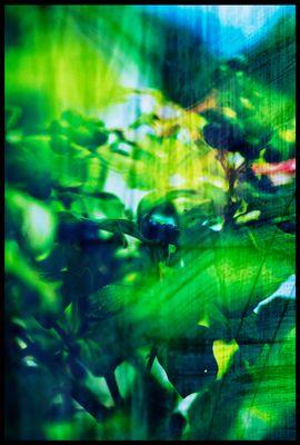 """Mostra online di laura fogazza - """"Il giardino incantato"""" - 6."""