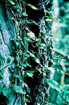 """Mostra online di laura fogazza - """"Il giardino incantato"""" - 8."""