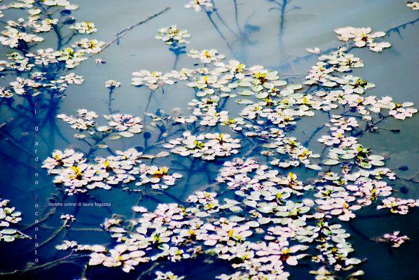 """Mostra online di laura fogazza - """"Il giardino incantato"""""""