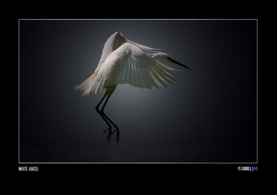 """Mostra online di Luisa Mantero """"Attimi di luce"""" - 1. White Angel"""