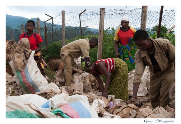 """Mostra online di Marco Giustiniani """"Malawi, sulle colline del tè"""" - 1. La scelta dei sacchi"""