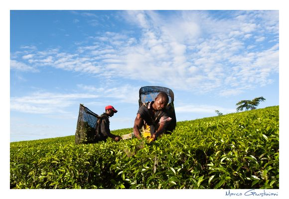 """Mostra online di Marco Giustiniani """"Malawi, sulle colline del tè"""" - 3. Tra il verde e l'azzurro"""