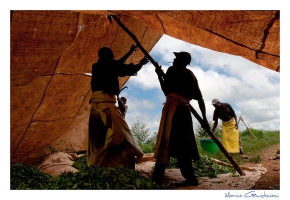 """Mostra online di Marco Giustiniani """"Malawi, sulle colline del tè"""" - 4. Al riparo..."""
