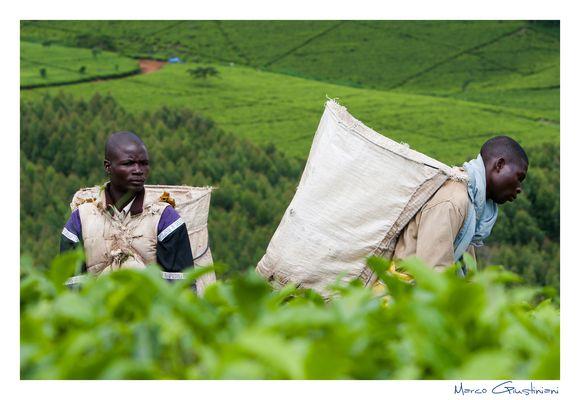 """Mostra online di Marco Giustiniani """"Malawi, sulle colline del tè"""" - 7. Dall'alto..."""