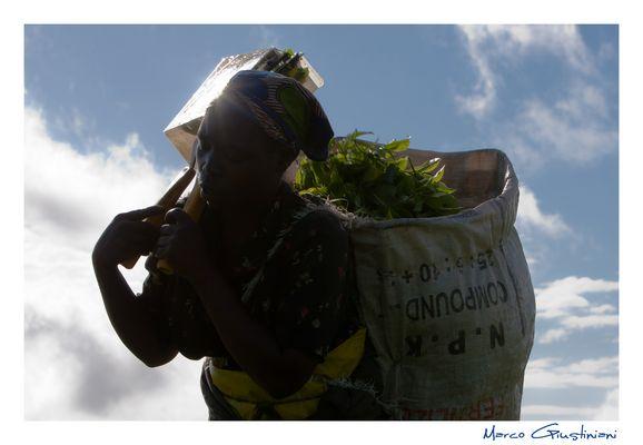"""Mostra online di Marco Giustiniani """"Malawi, sulle colline del tè"""" - 8. Sulle proprie spalle..."""