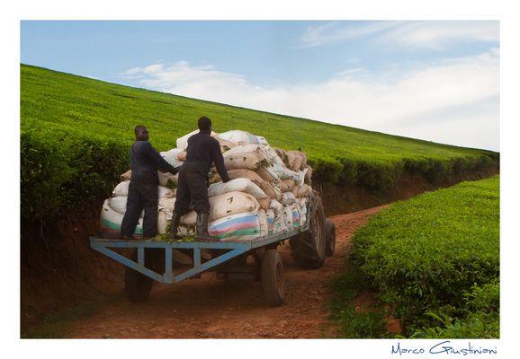 """Mostra online di Marco Giustiniani """"Malawi, sulle colline del tè"""" - 9. Fine lavoro..."""