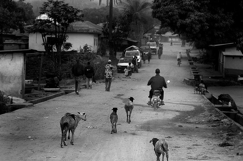 """Mostra online di Marco Pavani: """"Per le strade della Guinea"""" - 8. Life"""