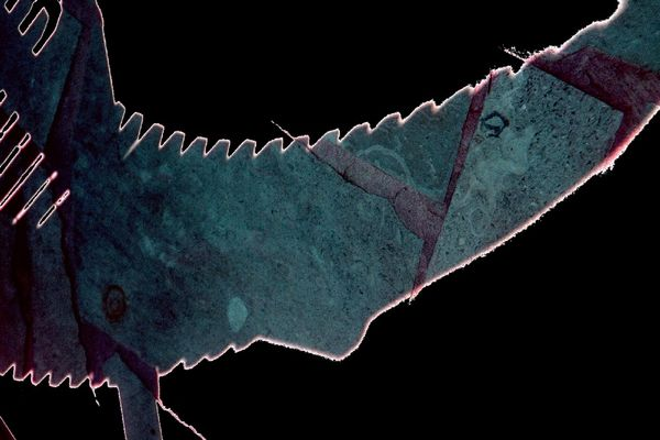 "Mostra online di Maria Luisa Runti: ""La favola magica"" - 10. Pesce sega"